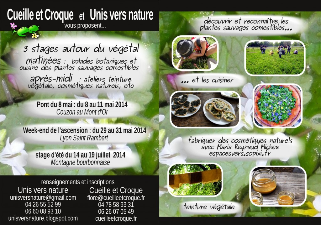 Flyer stages plantes sauvages
